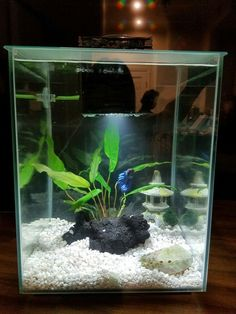 Betta need gallons, a place to hide, temperatures of degrees Fahrenheit, and a filter. Betta Aquarium, Tropical Fish Aquarium, Tropical Fish Tanks, Nature Aquarium, Home Aquarium, Aquarium Ideas, Fish Aquariums, Planted Aquarium, Fish Tank Themes