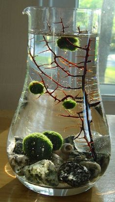 amp; Kilgore look!! I bought one of the marimo balls and I'm gna get a little environment!! Check them out!