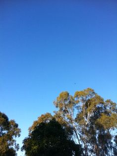 Sky view in Muswellbrook