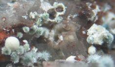 Symplesite (bleu-gris) avec Kaatialaite (blanc). Oberschulenberg/Grube Glücksrad, Schulenberg im Oberharz, Goslar, Landkreis, Niedersachsen, Deutschland FOV=4 mm Photo Torben