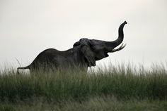 Nacionalni park Amboseli