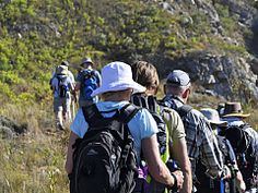 Green Mountain Trail in the Overberg. Hiking in South Africa Shark Cage, Hiking Trips, Mountain Trails, Green Mountain, Whale Watching, Day Hike, Nature Reserve, The Great Outdoors, South Africa