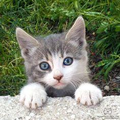 """From @gunescr: """"Guard kitty on duty"""" #catsofinstagram"""