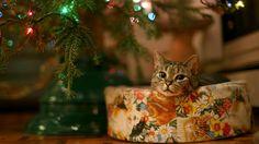 Cat under Christmas tree Widescreen Wallpaper - #2403
