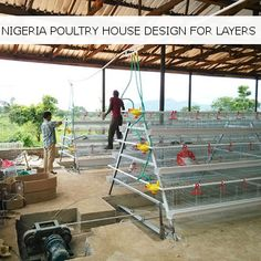 Nigeria - Poultry Housing Design for Layers with layer cage installation. Poultry Cage, Poultry Farming, Poultry House, Egg Farm, Poultry Equipment, Chicken Cages, Floor Plans, House Design, Building