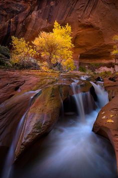 A small falls and Cottonwoods at their Autumn best in the canyons of Utah's Escalante wilderness.