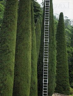 Trees that require a need for a ladder this tall..Tree Trimming, France Image Via: The Best Travel Photos