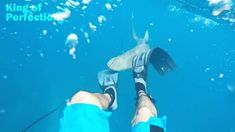 The best of shark attacks caught on camera. You can see amazing see scenes caught by accident and some of them are really scary. The most attacks are by Grea. Shark Attacks, Great White Shark, Wild Animals, Savannah Chat, Cartoon, Pets, Youtube, Cartoons, Youtubers