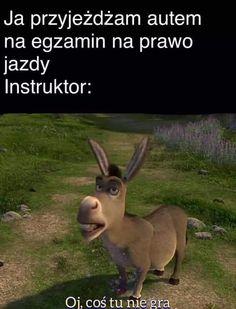 Polish Memes, I Laughed, Haha, Humor, Jokes, Funny, Pictures, Historia, Photos