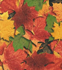 Autumn Inspirations Fabric- Sundrenched Leaves