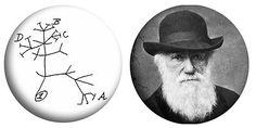 Charles Darwin, Evolution, Origin of Species, Tree,Twin pack 2 x 25mm Pin Badges