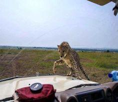 #masaimara - #kenya