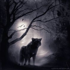 Wolfwood I by wyldraven.deviantart.com on @deviantART