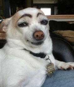 Funny Animal Jokes, Cute Funny Animals, Animal Memes, Cute Baby Animals, Funny Dogs, Cute Dogs, Funny Chihuahua, Hilarious Sayings, Funny Memes