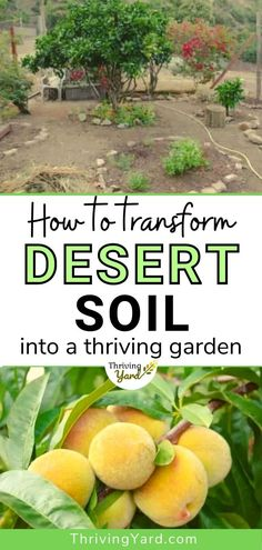 This guide to desert gardening follows the success story of a gardener who transformed desert soil into a thriving garden of fruit, edible flowers and vegetable. She discusses lessons learned over the year as she overcomes obstacles to desert gardening. Follow these tested gardening tips and advice. Improve your soil to improve your garden.