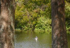 Peaceful Goose in Central Park - East Orlando, FL