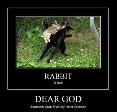 attack rabbit