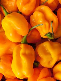 Scotch Bonnet chilli seeds Yellow. #chilli #seeds http://www.bitcoinseedstore.com/chilli-seeds/scotch-bonnet-yellow-10-pk.html