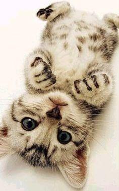 Baby cat / kitten so cute
