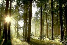 http://www.voornepartners.com/media/nieuws/Arizona_forest_light_shutterstock.jpg