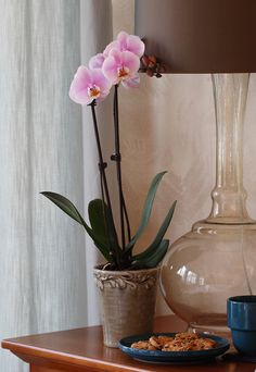 Pale Pink Orchid on Nightstand Pink Orchids, Pink Flowers, Pink Flower Pictures, Indoor Orchids, Pale Pink, Nightstand, Beautiful Flowers, Diy Home Decor, Glass Vase