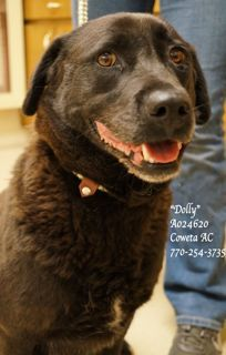 A-4  EXTREMELY URGENT! LAST CHANCE! THIS PET WILL BE EUTHANIZED FRIDAY 5-31-13!   In Coweta County Animal Control   770-254-3735   Pls Save Dolly.  Such a beautiful girl, and such a sweet sweet face!  I can''t believe she hasn't found a furever home yet, please don't let her die tomorrow!!  This is one perfect family pet, she'll love to place with the kids and be your best friend ever...all she wants is a family to love her and one she can give all her love to. (Repinned 5/31/2013) Let's hope this sweet dog was saved/is safe!