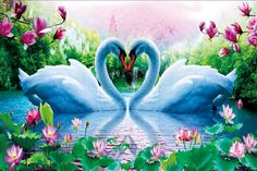 swan heart images