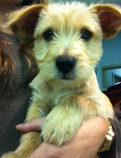 Save a life...adopt a mixed breed  <3