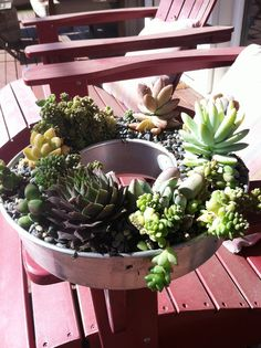 succulents in large vintage tins - Google Search