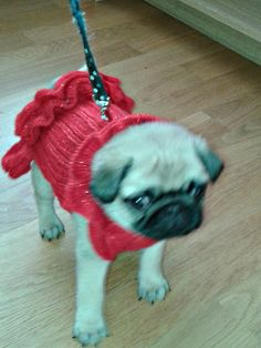 Pug Dog  sweater / dress in red sparkle with frills on by CUTIEDOG, £12.50