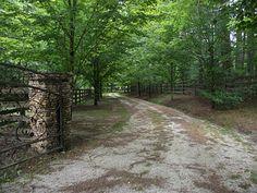 Magnolia Tree Lined Driveway