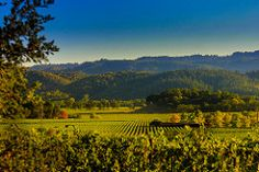 Nab wines by wines by availing Low lodging coupled with visit to wineries for your Napa Valley Esca    http://flightsglobal.net/nab-wines-by-wines-by-availing-low-lodging-coupled-with-visit-to-wineries-for-your-napa-valley-esca/   #Availing, #Coupled, #Esca, #Lodging, #Napa, #Valley, #Visit, #Wineries, #Wines #Napa_County