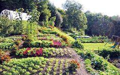 La coltivazione in permacultura può essere applicata a spazi di ogni tipo. Impariamo come usare questi metodi per la produttività nostro orto-giardino