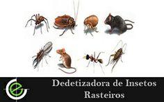 Dedetizadora de Insetos Rasteiros é aqui realizamos de forma eficiente exterminando todos e qualquer tipo de insetos rasteiros, acesse e confira agora mesmo.