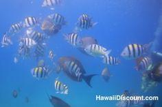 Beautiful fish - Oahu Hawaii