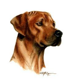 RHODESIAN RIDGEBACK Dog Watercolor Painting Art by k9artgallery   WATERCOLOR