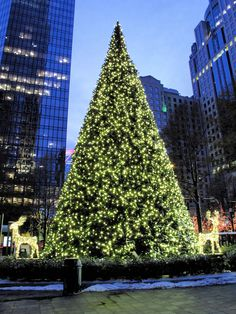 Christmas Tree in Downtown Charlotte, North Carolina