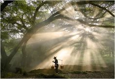 Millennia old Banyan Tree - yang ja xi, Fujian | amazing how the light was catched in this picture
