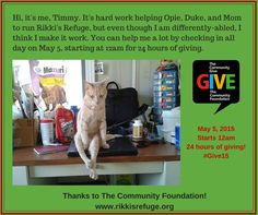 Your #GIVE15 donation helps us help cats like TIMMY! https://www.thecommunitygive.org/#npo/rikkis-refuge THANK YOU!