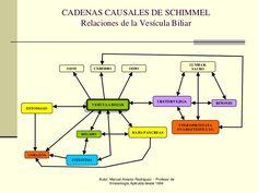 Autor: Manuel Alvarez Rodríguez - Profesor deKinesiología Aplicada desde 1994CADENAS CAUSALES DE SCHIMMELRelaciones de la ...