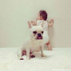 French-Bulldog-Reno-20140702-04 #frenchie #dog #daughter #babygirl #フレンチブルドッグ