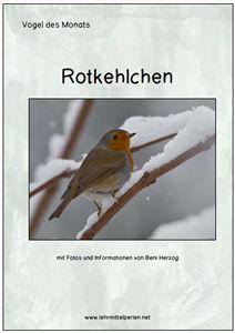 Vogel des Monats: das Rotkehlchen
