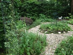 The shady back garden.
