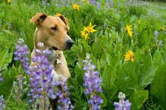 10 Herbs for Dogs (and Their People) | Dogster