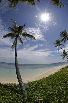 Palms & Beach Vertical