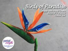 BIRDS OF PARADISE TUTORIAL