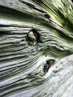 Особая любовь к дереву у меня с детства. До сих пор помню густые леса, полные ценных пород — ясеня, дуба, вишни, бука, липы и граба, тиса и самшита, шелковистой акации. Я часто пропадала в лесу, убегая туда при любой возможности. А если бабушка не пускала, то уходила под предлогом сбора груш: в том лесу росло много грушевых деревьев и грецких орехов, сбор которых очень поощрялся.