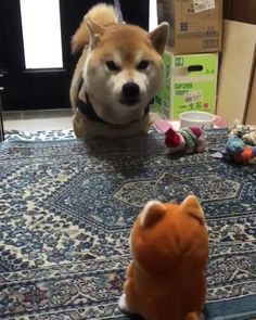 You talkin' to Me You Little Stuffy Toy? 🎥 credit unknown 👉 No copyright infringement intended! 📩 DM me in regards to any questions / concerns / credit / removal! Cute Funny Animals, Cute Baby Animals, Funny Cute, Funny Dogs, Animals And Pets, Cute Cats, Crazy Animals, Animal Antics, Animal Memes