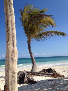 Cancunian Palmtree