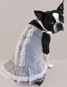 """Boston Terrier Dog Lucy is sassy in her red """"Girly Tuxedo Dress"""" !!!! www.fetchdogfashions.com #puppy"""